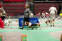 Dogshow 2017-04-08 KC of Yorkville--145219-2