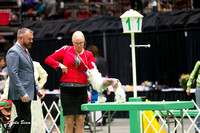 Dogshow 2017-04-08 KC of Yorkville--151643