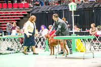 Dogshow 2017-04-08 KC of Yorkville--174218
