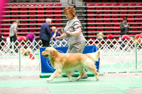 Dogshow 2017-04-08 KC of Yorkville--153805-4