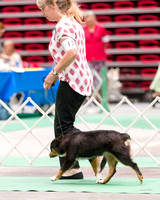 Dogshow 2017-07-08 Greater DeKalb KC--140753