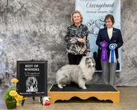 Dogshow 2018-03-03 CSSC Day 1--145913