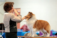 Dogshow 2018-03-04 CSSC Day 2 Candids--123948