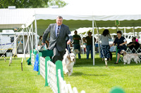 Dogshow 2017-06-04 untitled shoot--101827