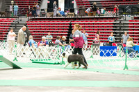 Dogshow 2017-07-08 Greater DeKalb KC--140938-3