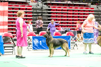 Dogshow 2017-07-08 Greater DeKalb KC--101610