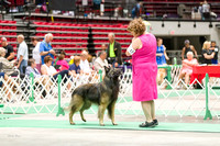Dogshow 2017-07-08 Greater DeKalb KC--101624