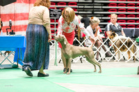 Dogshow 2017-07-08 Greater DeKalb KC--152402