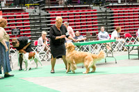 Dogshow 2017-07-08 Greater DeKalb KC--152544