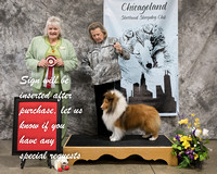 Dogshow 2018-03-04 CSSC Day 2--141715