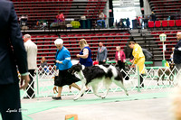 Dogshow 2017-04-08 KC of Yorkville--145100-2