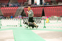 Dogshow 2017-04-08 KC of Yorkville--173931-3