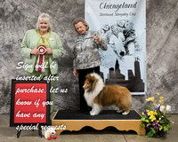 Dogshow 2018-03-04 CSSC Day 2--141714-3