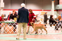 Dogshow 2017-12-09 Skokie Valley KC--090319-2