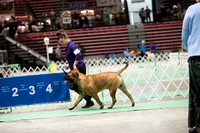 Dogshow 2017-04-08 KC of Yorkville--123102