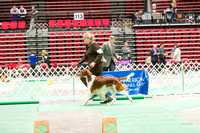 Dogshow 2017-04-08 KC of Yorkville--153451