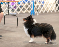 Dogshow 2018-03-04 CSSC Day 2 Candids--124219