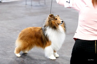 20170304 Best of Breed Competition