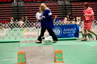 Dogshow 2017-04-08 KC of Yorkville--151522