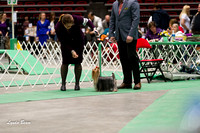 Dogshow 2017-04-08 KC of Yorkville--151942