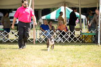Dogshow 2016-08-13 Oak Creek--150122
