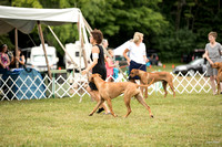 Dogshow 2016-08-13 Oak Creek--101556-5
