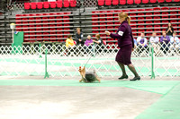 Dogshow 2017-04-08 KC of Yorkville--173940-2