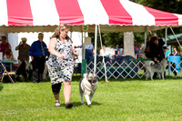 Dogshow 2017-08-01 Burlington WI KC D2--100636