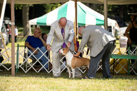 Dogshow 2016-08-13 Oak Creek--150158