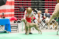 Dogshow 2017-07-08 Greater DeKalb KC--152357