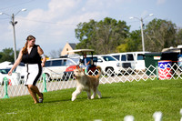 Dogshow 2017-08-01 Burlington WI KC D2--092614-2