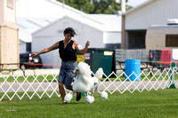 Dogshow 2017-07-31 Burlington WI KC--155328