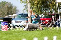 Dogshow 2017-08-01 Burlington WI KC D2--093951