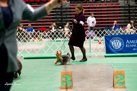 Dogshow 2017-04-08 KC of Yorkville--151515