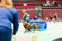 Dogshow 2017-04-08 KC of Yorkville--153507-2