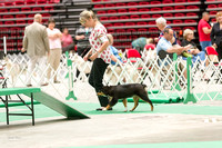 Dogshow 2017-07-08 Greater DeKalb KC--140755-4