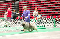 Dogshow 2017-07-08 Greater DeKalb KC--142231-3