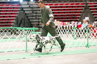 Dogshow 2017-04-08 KC of Yorkville--162324-3