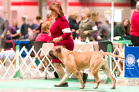 Dogshow 2017-12-09 Skokie Valley KC--090506-2