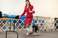 Dogshow 2018-03-04 CSSC Day 2 Candids--134622-2