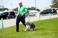 Dogshow 2017-08-01 Burlington WI KC D2--101901