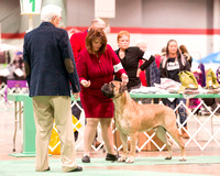 Dogshow 2017-12-09 Skokie Valley KC--090539
