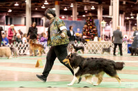 Dogshow 2017-12-09 Skokie Valley KC--165324