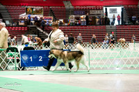 Dogshow 2017-04-08 KC of Yorkville--131258
