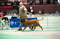 Dogshow 2017-04-08 KC of Yorkville--123429-2