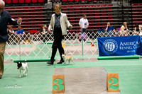 Dogshow 2017-04-08 KC of Yorkville--151520-2