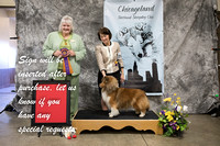 Dogshow 2018-03-04 CSSC Day 2--141453