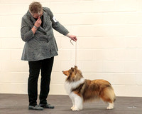 Dogshow 2018-03-04 CSSC Day 2 Candids--124135
