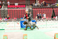 Dogshow 2017-04-08 KC of Yorkville--153501