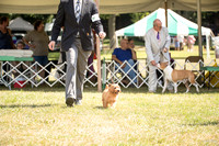 Dogshow 2016-08-13 Oak Creek--150138-2